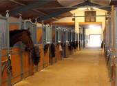 Бизнес идеи: Организация частной конюшни