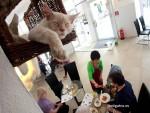 Кафе для любителей кошек